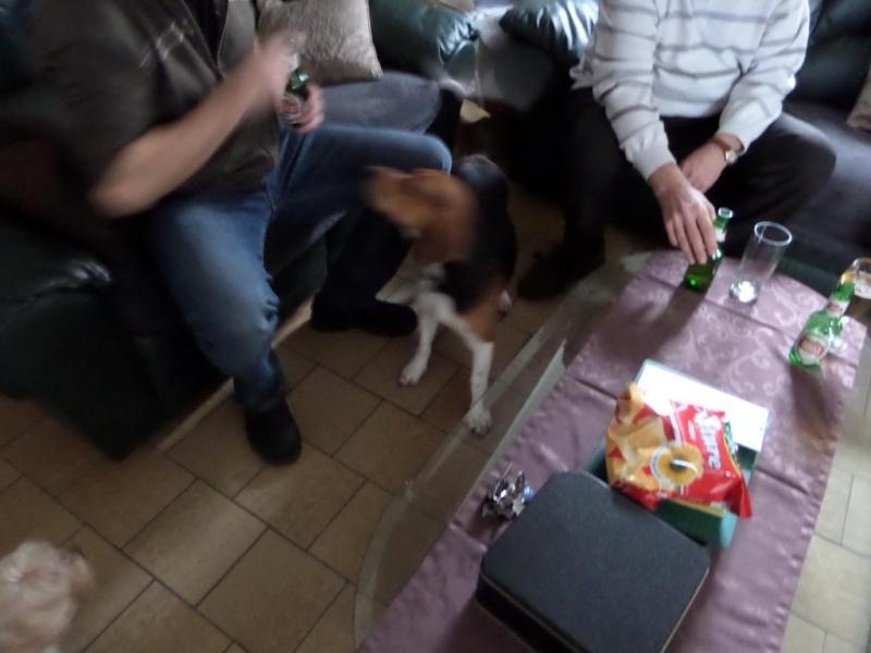 Besoin de votre aide pour Ioko, femelle beagle de deux ans - Page 2 00312