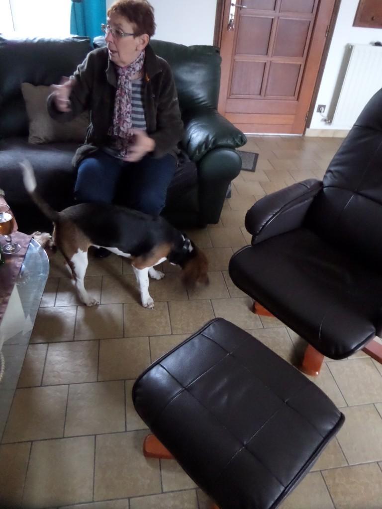 Besoin de votre aide pour Ioko, femelle beagle de deux ans - Page 2 00411