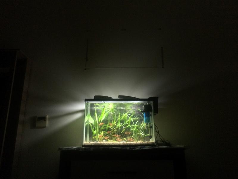 Meine little petite Aquarioum (premier) Personalisée 75L Img_3617