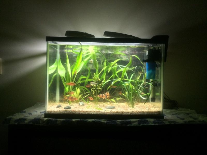 Meine little petite Aquarioum (premier) Personalisée 75L Img_3618