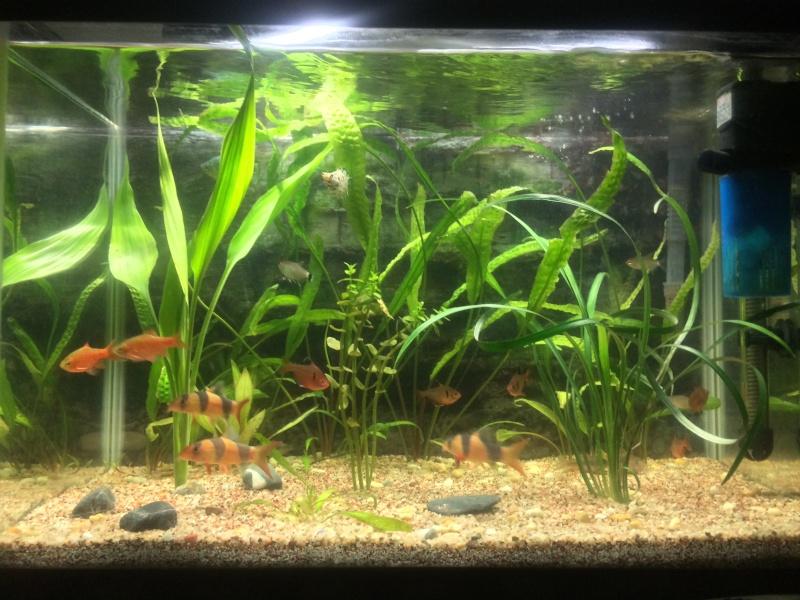 Meine little petite Aquarioum (premier) Personalisée 75L Img_3619