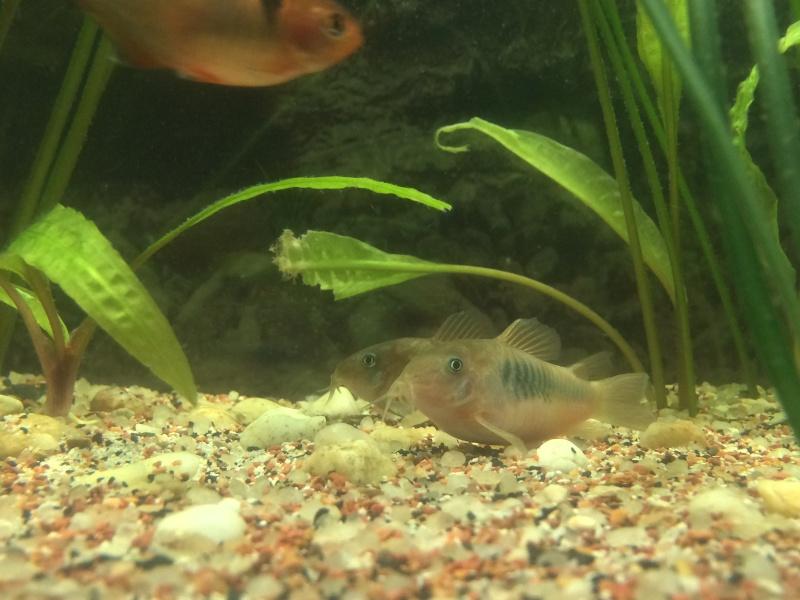Meine little petite Aquarioum (premier) Personalisée 75L Img_3622