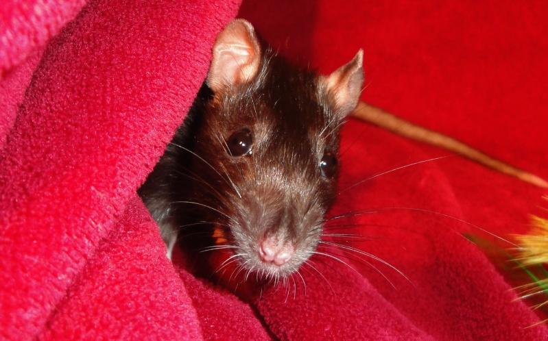 ❤ Les ratons de la St Valentin ❤ - Page 3 Dsc05115