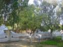 Camping Chez Tito à OUNARA ex Les oliviers (Zone 4) Dsc01610