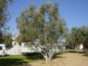 Camping Chez Tito à OUNARA ex Les oliviers (Zone 4) Dsc01611