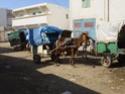 Camping Chez Tito à OUNARA ex Les oliviers (Zone 4) Dsc01612