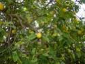 Camping Chez Tito à OUNARA ex Les oliviers (Zone 4) Dsc01617