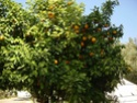 Camping Chez Tito à OUNARA ex Les oliviers (Zone 4) Dsc01618