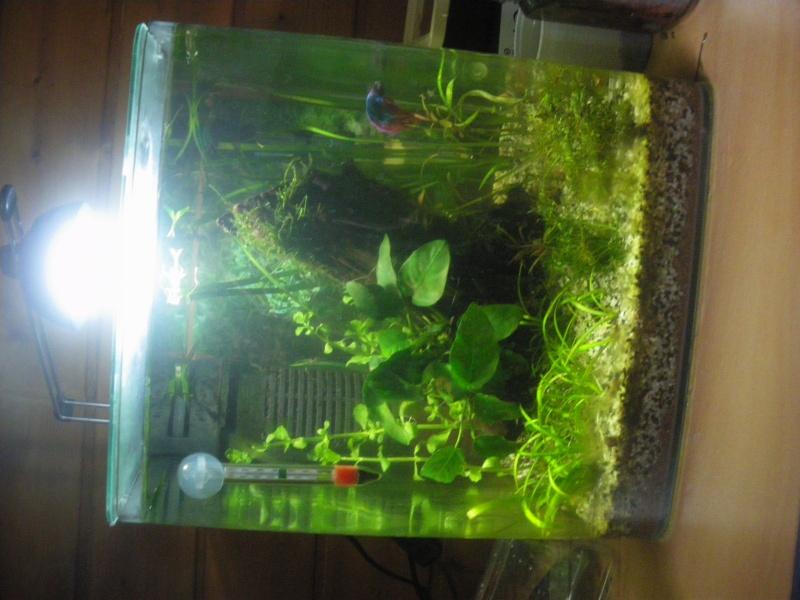 besoin d'aide pour améliorer mon aquarium Imgp6212