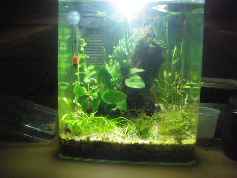 besoin d'aide pour améliorer mon aquarium Imgp6213