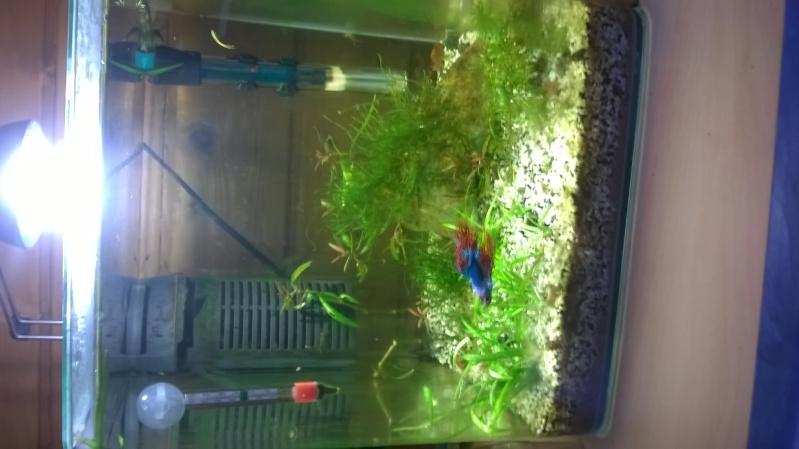 besoin d'aide pour améliorer mon aquarium Wp_20124