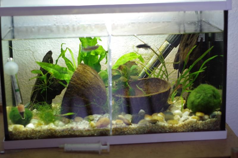 taille de l'aquarium? - Page 2 Imgp5311