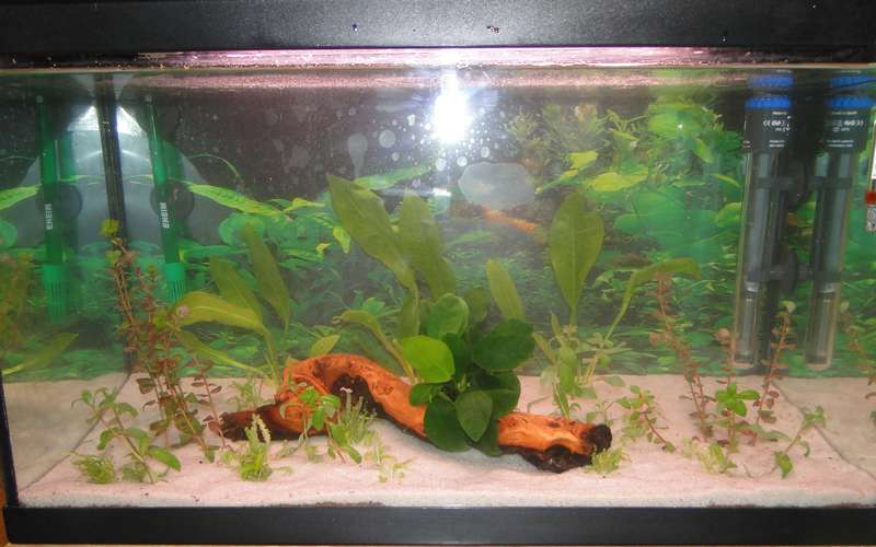 Premier aquarium 60l ! - Page 4 Dsc05014