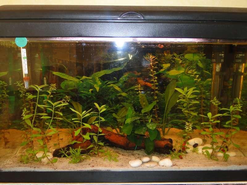 Premier aquarium 60l ! - Page 4 Dsc05015