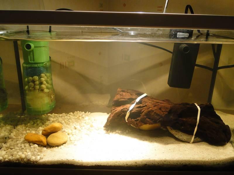 Lancement aquarium 20 litres - Page 2 Dsc05017