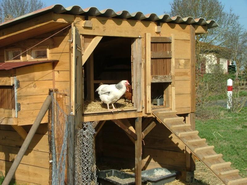 A propos de poules Dscf3011