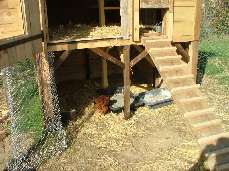 A propos de poules Dscf3012