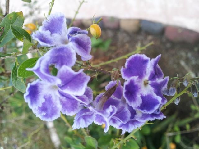les belles dans leurs milieux naturel 20150211