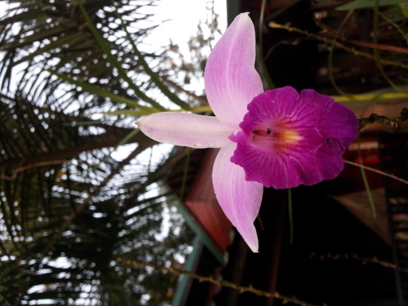 les belles dans leurs milieux naturel 20150216