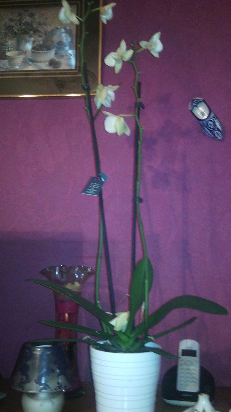 orchidée en détresse Img_2014