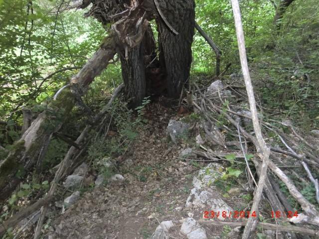 """"""" La galerie des arbres Creux """" 510"""