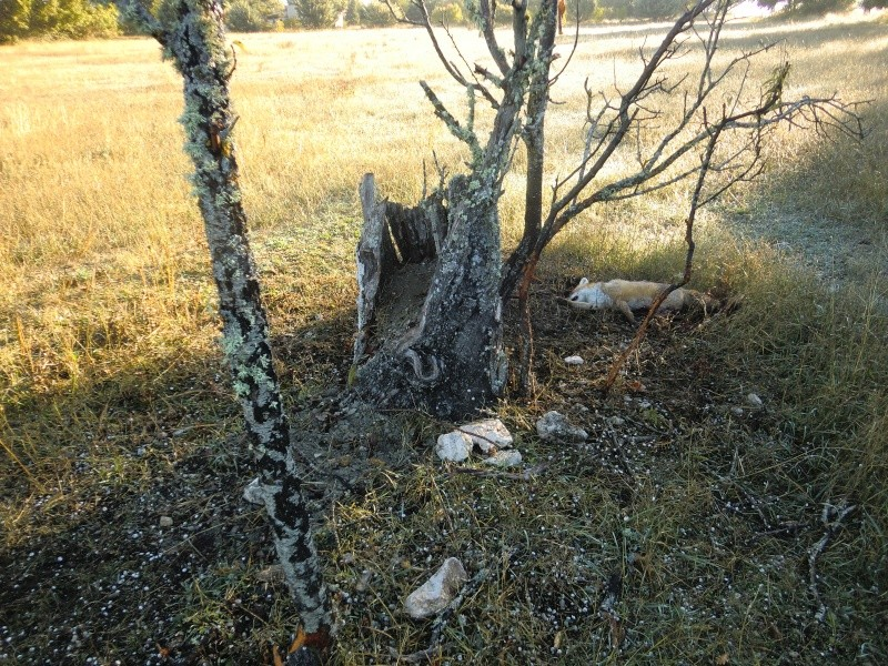 """ La galerie des arbres Creux "" Arbre_13"