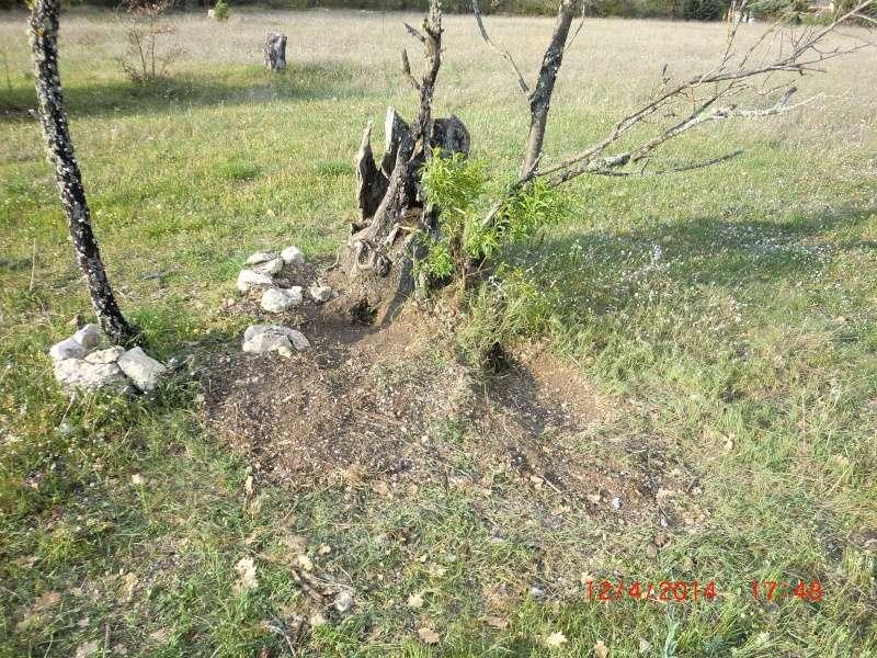 """"""" La galerie des arbres Creux """" Cimg6311"""