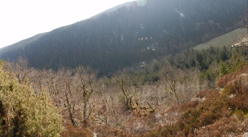 La vallée de la Vologne... à tire d'aile Dscn3210