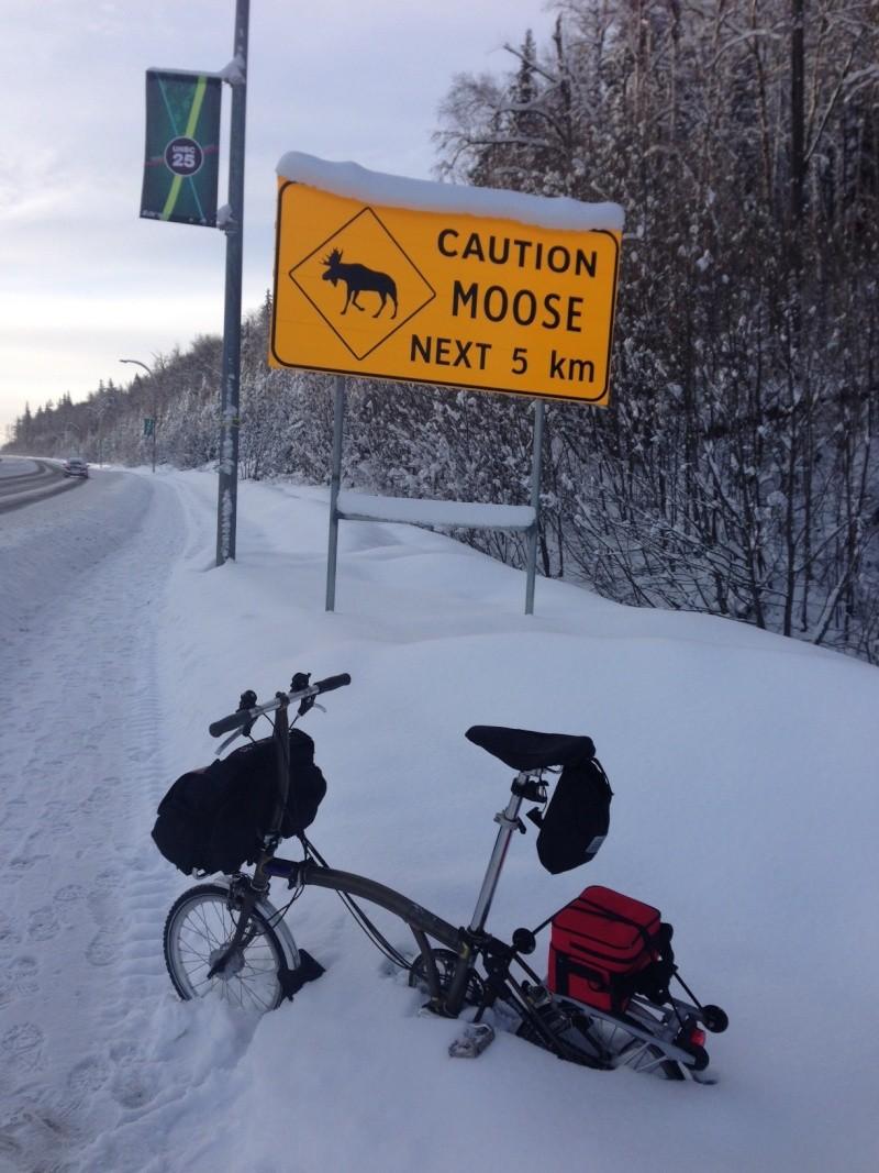Pneumatiques cloutés pour la neige et la glace - Page 3 Moose_12