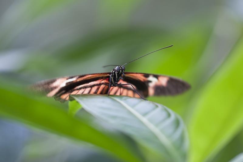 Les Tropiques à Honfleur Papill10