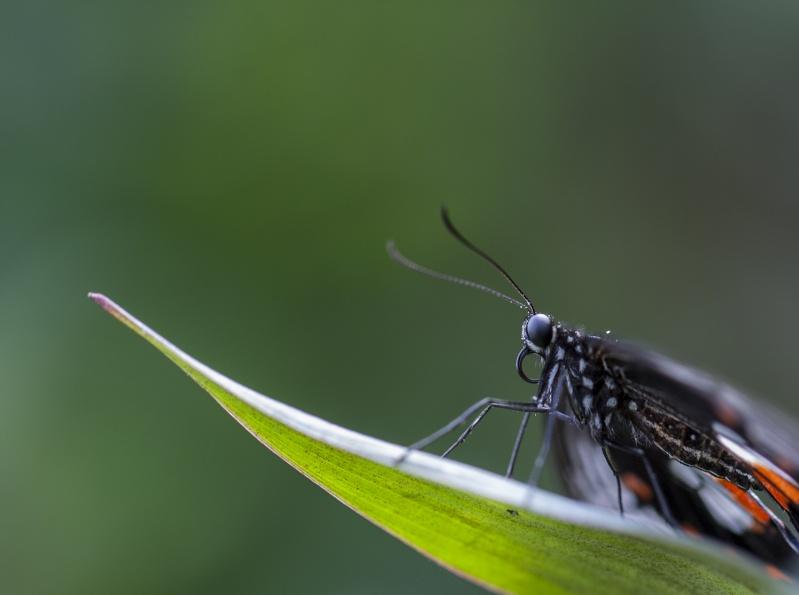 Les Tropiques à Honfleur Papill11