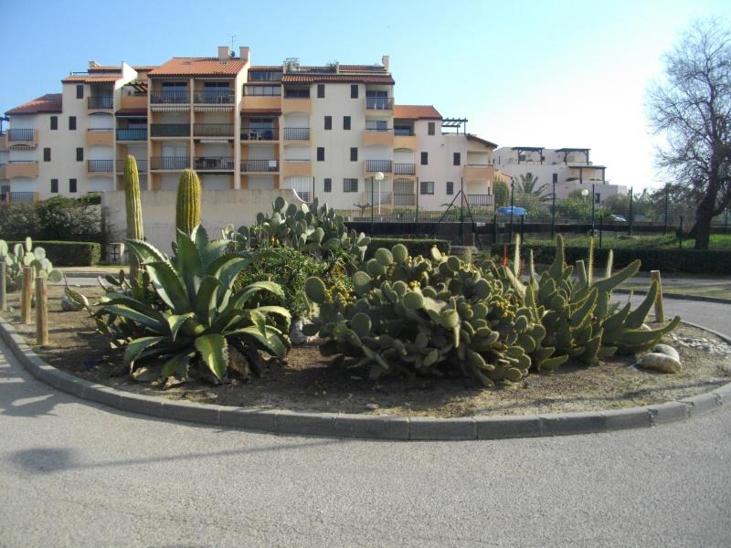 La Côte Vermeille Imgp6210