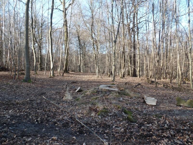 [sortie] forêt de Marly (78) Sam_0312