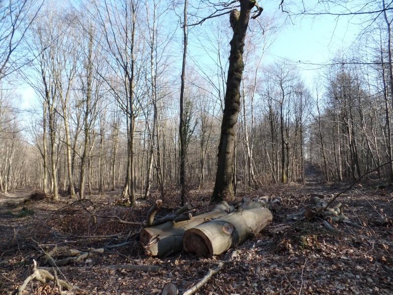 [sortie] forêt de Marly (78) Sam_0313