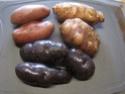 Salade de pommes de terre et topinambour en salade.photos. Img_0631