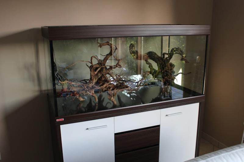 Mon premier aquarium (400l) Img_1311