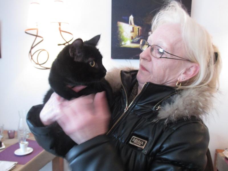 Jameson, chaton noir né le 11/04/2014 Img_3212