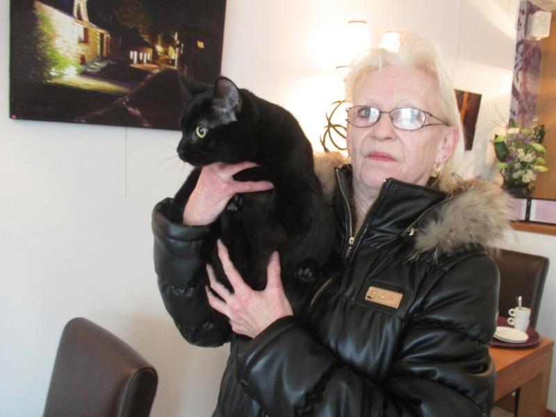 Jameson, chaton noir né le 11/04/2014 Img_3213