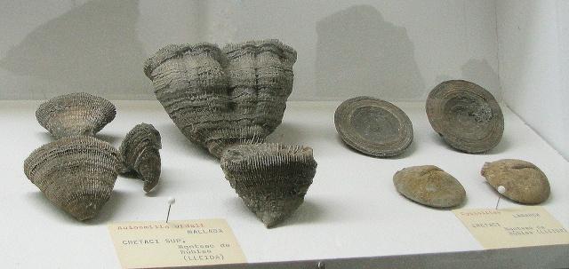 NOVA sortida dissabte 31-01-15 Museu de Geologia i del Guix de Vilobí del Penedès. Foto-511
