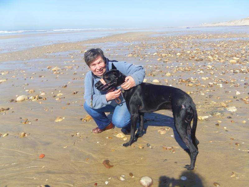 """Morante, galgo attaqué, mordu par ses frères car trop bon, trop doux,à l'adoption """"Scooby France Adopté  - Page 19 2011-010"""