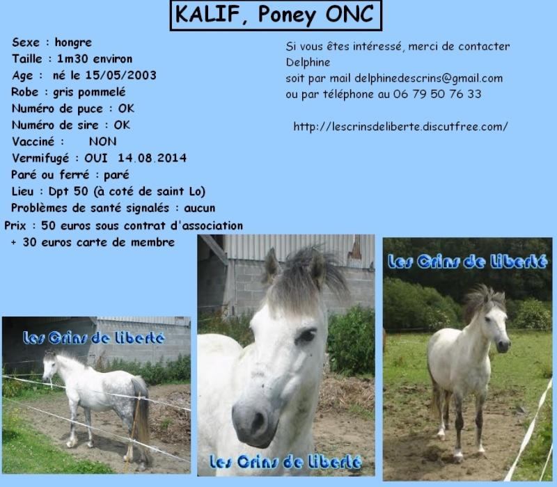 Dpt 50 - KALIF  Poney ONC 13 ans - contact Delphine - adopté par Rodolphe Janvier 2015 Les_cr11