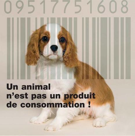 Les animaux reconnus comme des être sensibles. Un-ani10
