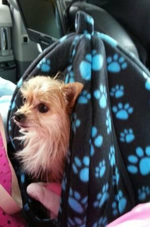 HELP US FIND OUR DOG - $2000.00 REWARD Buf210