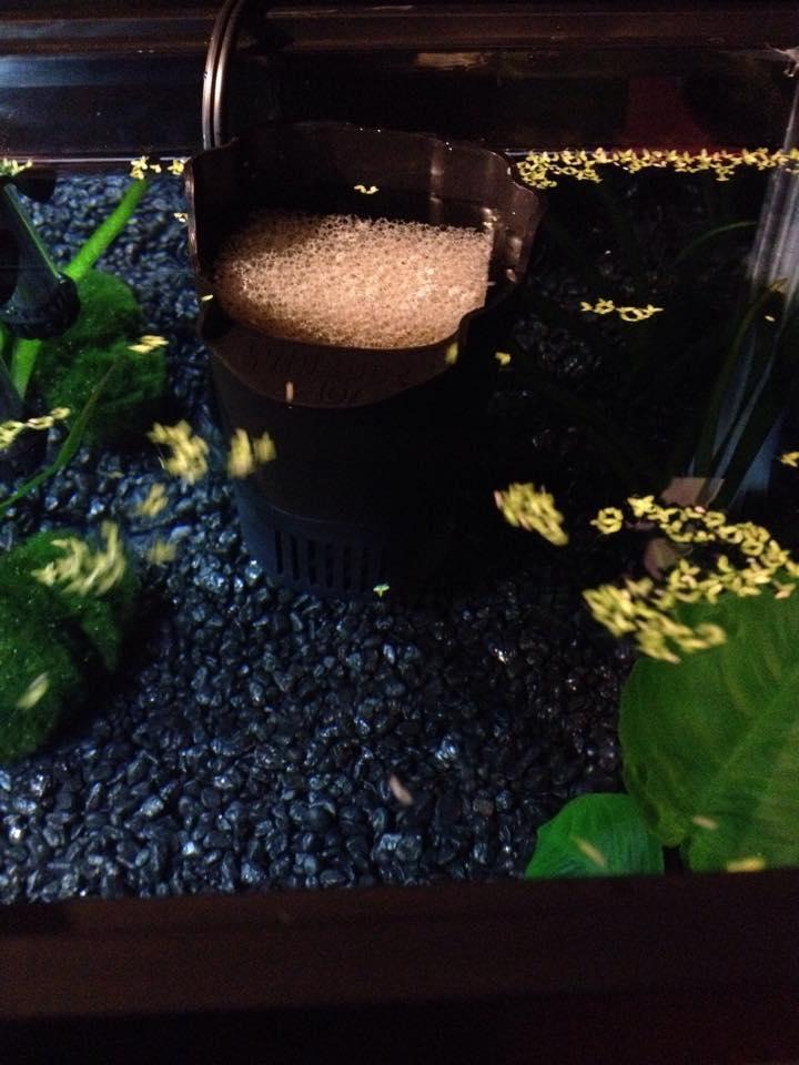 La Nouvelles aquarium de betta et un réamenagement de l'autre :D 10917711