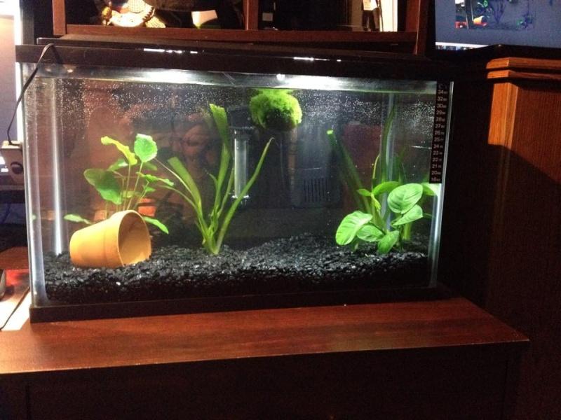 La Nouvelles aquarium de betta et un réamenagement de l'autre :D 10966811