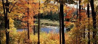 Autumn Lake. Forest10