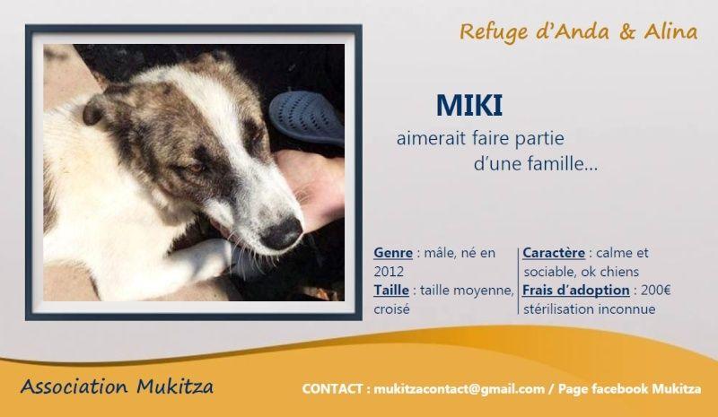 MIKI, mâle taille moyenne, blessé, né 2012 - (ANDA) Visue183