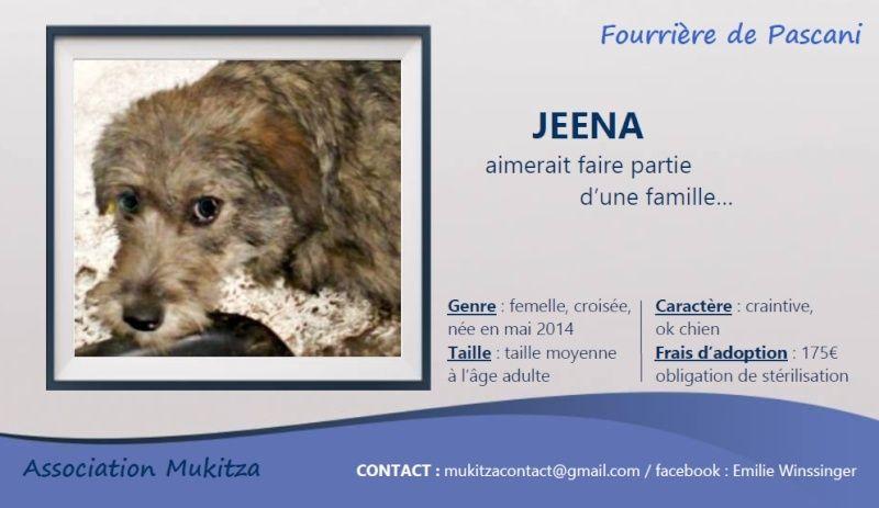JEENA, F-X, taille moyenne, née Mai 2014 (PASCANI) - En FA chez jademalu (Départ89) Visuel56