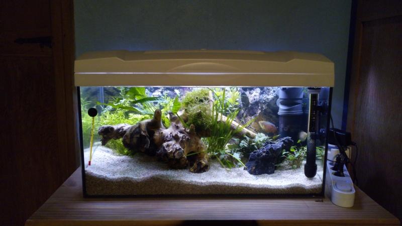 Lancement aquarium 60 litres Img_2020