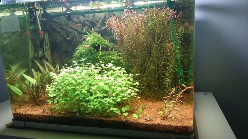 aquarium 54L brut de mapuce.bb - Page 3 10411710